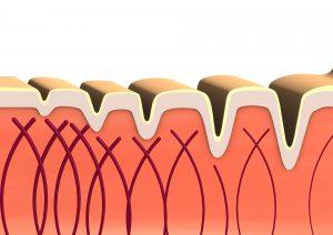 איך הפך הקולגן לאחד מתוספי התזונה הפופולריים ביותר?
